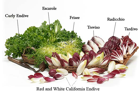 Different types of endive