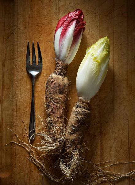 Red and White Endive
